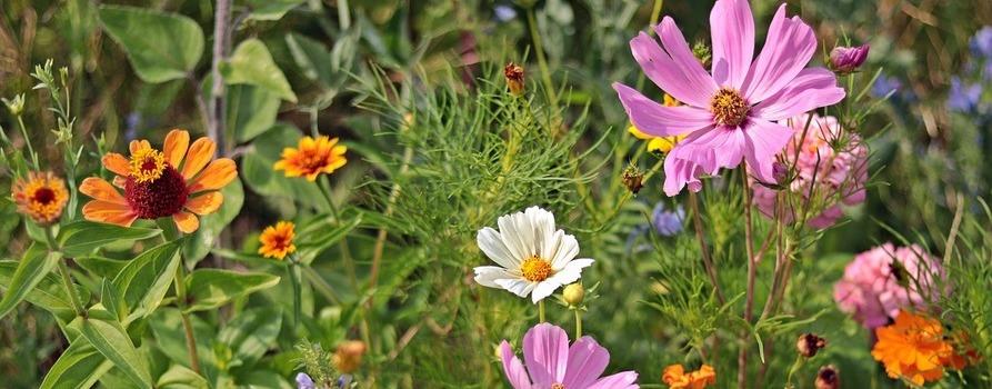 kolorowe kwiaty na dzikiej łące - różowe, pomarańczowe i białe. Ilustracja do długiego weekendu.