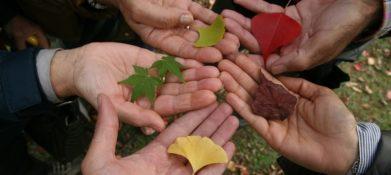cztery dłonie, a na każdej z nich leży inny liść - różnią się od siebie i kolorem i kształtem. To ilustracja do oświadczenia zarządu naszej fundacji w związku z kampanią Nie świruj, idź na wybory