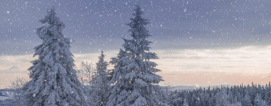 drzewa iglaste obsypane śniegiem, płatki śniegu sypią. Leży też śnieg wokół. To ilustracja do informacji o przerwie świątecznej