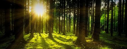 las. soczyście zielona trawa. spomiędzy drzew wygląda słońce.