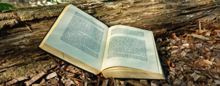 książka oparta o pień drzewa leży na leśnej ściółce